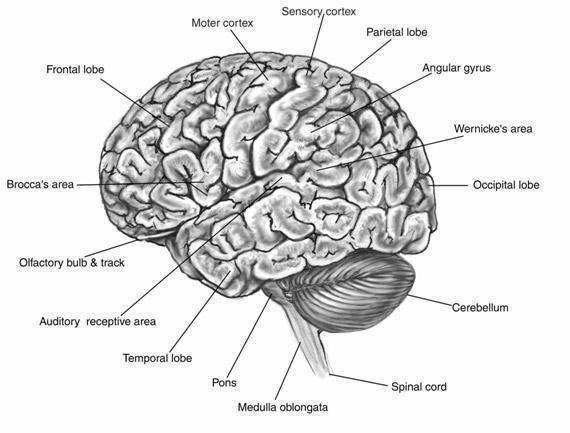 neurotransmitter testing